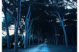 skog.natt_