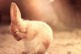 Cute-Sad-Bunny