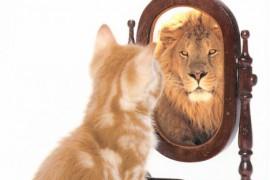 katten-och-lejonspegeln-1394361382