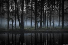 skogsa
