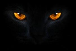 golden-cat-eyes